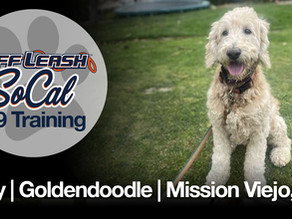 Lucy | Goldendoodle | Mission Viejo, CA