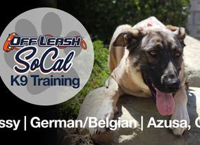 Missy | German/Belgian | Azusa, CA