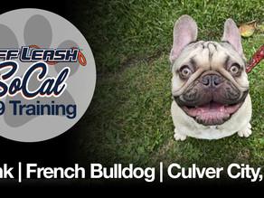 Frank | French Bulldog | Culver City, CA