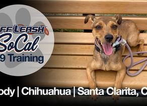 Woody | Chihuahua | Santa Clarita, CA