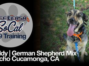 Freddy | German Shepherd Mix | Rancho Cucamonga, CA
