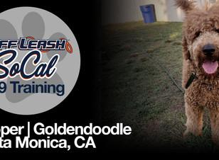 Cooper   Goldendoodle   Santa Monica, CA
