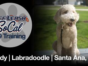 Teddy   Labradoodle   Santa Ana, CA