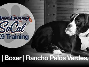 Kaia | Boxer | Rancho Palos Verdes, CA