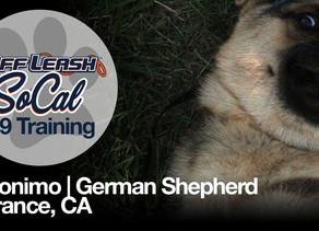 Geronimo | German Shepherd | Torrance, CA
