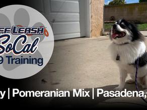 Sully | Pomeranian Mix | Pasadena, CA