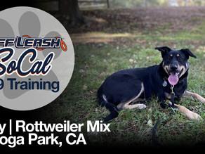 Roxy | Rottweiler Mix | Canoga Park, CA