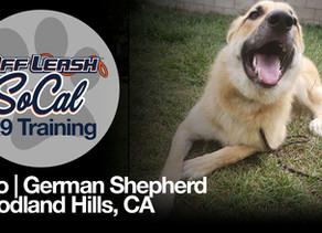 Kylo | German Shepherd Mix | Woodland Hills, CA