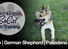 Kylo | German Shepherd | Pasadena CA