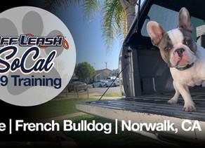 Blue | French Bulldog | Norwalk, CA