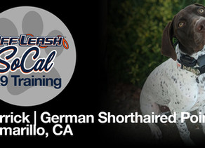 Derrick | German Shorthaired Pointer | Camarillo, CA