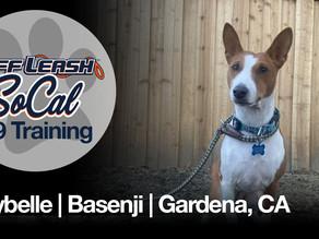 Maybelle | Basenji | Gardena, CA