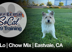 Lo-Lo | 21 Months Old | Chow Mix | Eastvale, CA