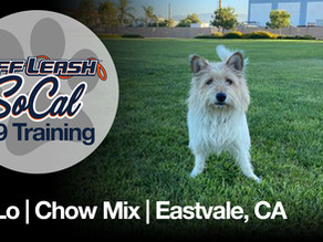 Lo-Lo   21 Months Old   Chow Mix   Eastvale, CA