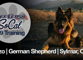 Enzo | German Shepherd | Sylmar, CA