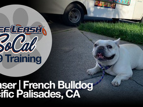 Chaser | French Bulldog | Pacific Palisades, CA