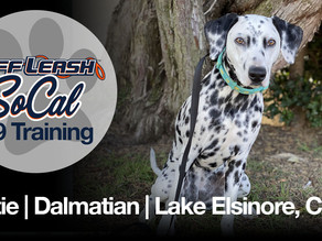 Dottie | Dalmatian | Lake Elsinore, CA