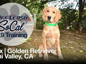 Max | Golden Retriever | Simi Valley, CA