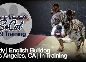 Lady | English Bulldog | Los Angeles, CA