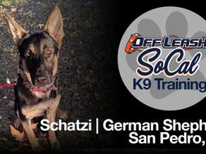 Schatzi | German Shepherd | San Pedro, CA