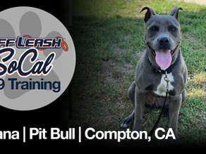 Moana | Pit Bull | Compton, CA