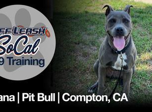 Moana   Pit Bull   Compton, CA