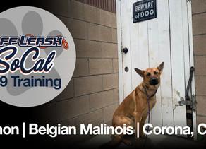 Simon | Belgian Malinois | Corona, CA