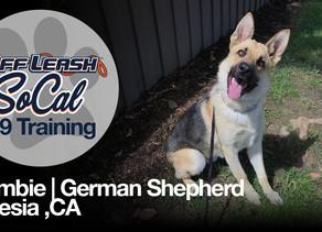 Zombie | German Shepherd | Artesia ,CA