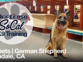 Nemets   German Shepherd   Glendale, CA