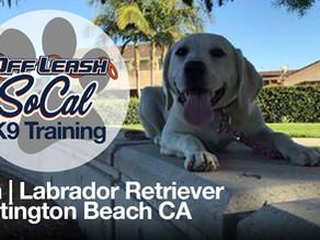 Lola | Labrador Retriever | Huntington Beach CA