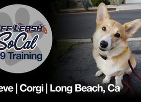 Maeve | Corgi | Long Beach, Ca