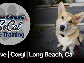 Maeve | Corgi | Long Beach, Ca