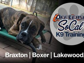 Braxton   6 Month Boxer   Lakewood, CA