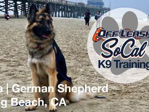 Ayla |  German Shepherd | Long Beach, CA