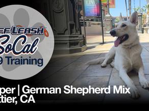 Cooper | German Shepherd | Whittier, CA