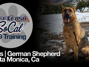Ross | German Shepherd | Santa Monica, CA