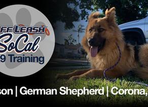 Tyson | German Shepard | Corona, CA