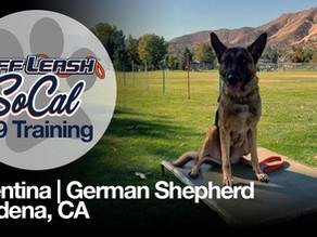 Valentina | German Shepherd | Gardena, CA