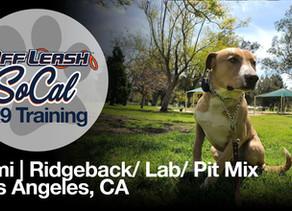 Kimi | Ridgeback/ Lab/ Pit Mix | Los Angeles, CA