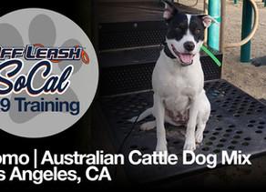 Momo | Australian Cattle Dog Mix | Los Angeles, CA