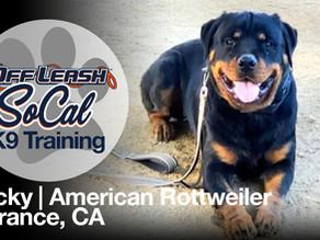 Rocky | American Rottweiler | Torrance, Ca
