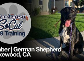 Ember | German Shepard Mix | Lakewood, CA