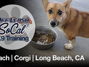 Peach | Corgi | Long Beach, CA