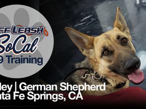 Ripley | German Shepherd | Santa Fe Springs, CA