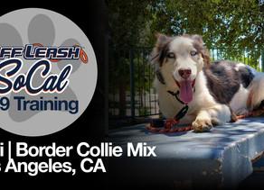 Levi | Border Collie Mix | Los Angeles, CA.