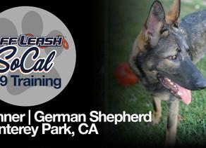 Gunner   German Shepherd   Monterey Park, CA