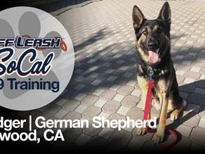 Dodger   German Shepherd   Lynwood, CA