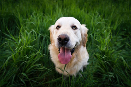animal-cute-dog-92380.jpg