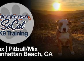 Ajax | Pitbull/Mix | Manhattan Beach, CA