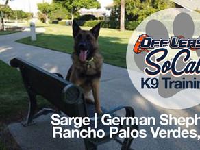 Sarge | German Shepherd | Rancho Palos Verdes, CA
